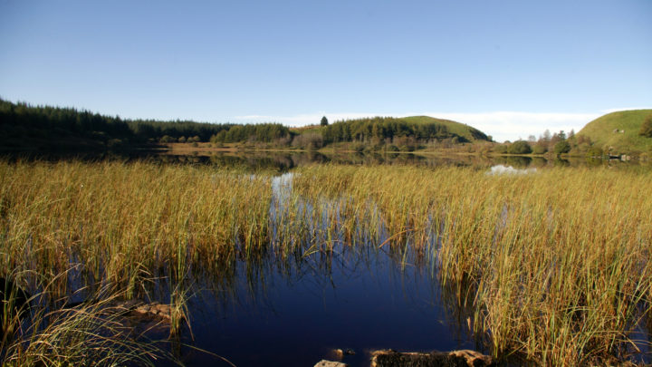 Carrigan Forest Lough Formal