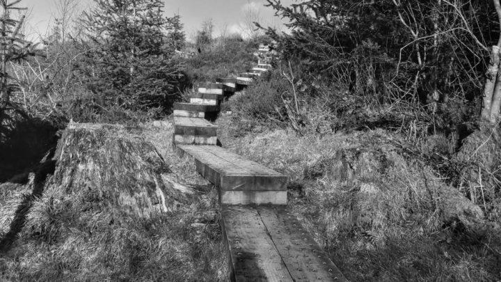 Cavan Burren Park   Photo Credit   Rachel Hume